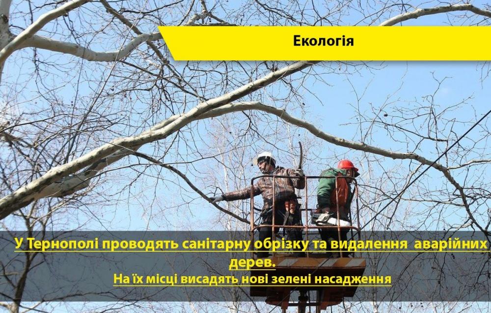 обрізка дерев у Тернополі