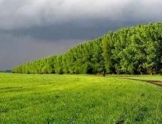 В рамках проєкту «Збереження лісових захисних насаджень Тернопільської міської територіальної громади» відбудеться круглий стіл