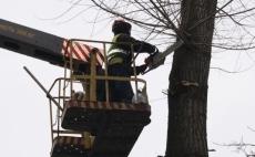У тернопільських парках здійснюють планову обрізку аварійних та сухих дерев